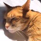 Cat sings Twinkle Twinkle Little Star