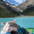My cat likes to come paddling with me. Or as he likes to think of it - floating nap time.