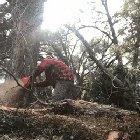 I'm a lumberjack and I'm ok.