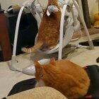 Cat vs Baby Swing