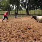 Play with the bull...