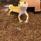 """""""Sup, ladies? Got any crickets? Grasshoppers? Earthworms?"""""""