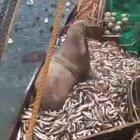 Russian fishing crew get a surprise catch
