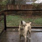 To catch the rain... I used to do this too!
