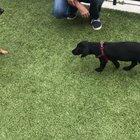 Hitdog in training
