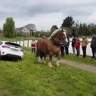 A Horse pulling a car out of a ditch.