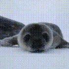 Seal boop