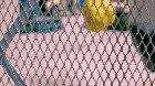 Water balloon, fence, slo-mo