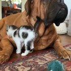 Gentle giant and his little new friend