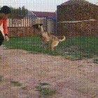 This doggo has super powers