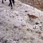 A crazy cat !!