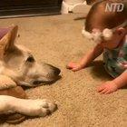 Dog returns kisses from a little girl