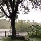 An island of trees floating by during Hurricane Dorian