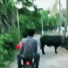 Leave The Cow Alone