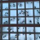 These bugs are actually what dancing looks like from underneath a glass floor! (STC in San Fransisco).