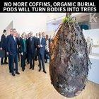 No more coffins, burial pods will turn bodies into trees