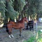 Fence can't contain this horse
