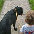 2yo son walking our 1yo doggo. They love each other!