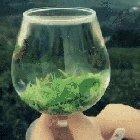Rehydrating dried tea leaves