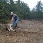 Man saving a trapped wolf.