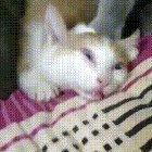 Human he stole my catnip