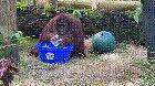 Sandra the Orangutan started washing her hands after observing her caretakers doing it