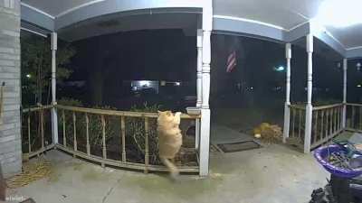 Caught an absolute unit on camera last night