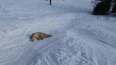 my sled people need me