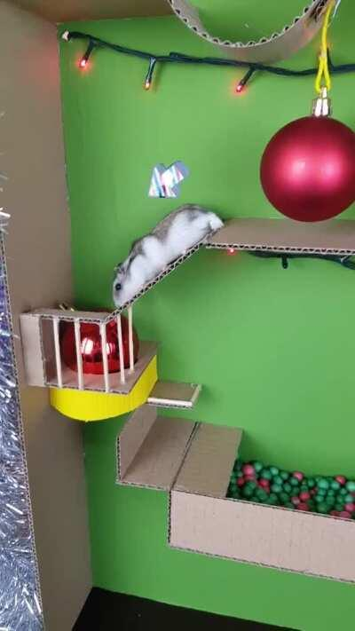 Hammy gets his very own little Christmas maze