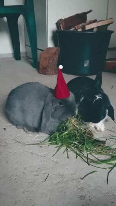 Happy Holidays, everyone💕✨