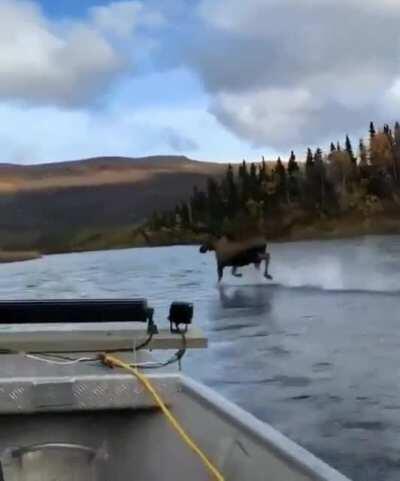 Moose Jesus