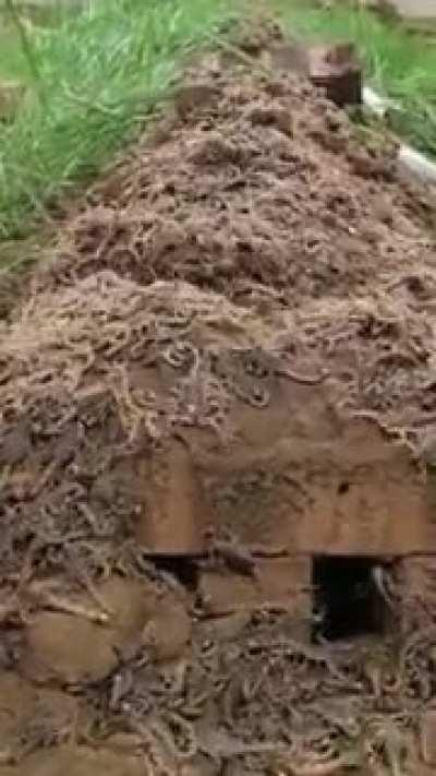 Scorpion nest is someone's backyard.
