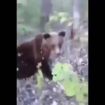 If I kick a bear