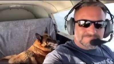 Dog went: 🚀