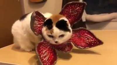 Demogorgan Cat