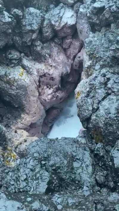 WCGW filming a blowhole