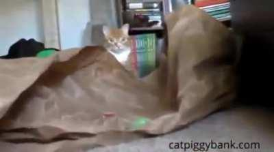 Cat dies as it sees a coin stealing cat toy.