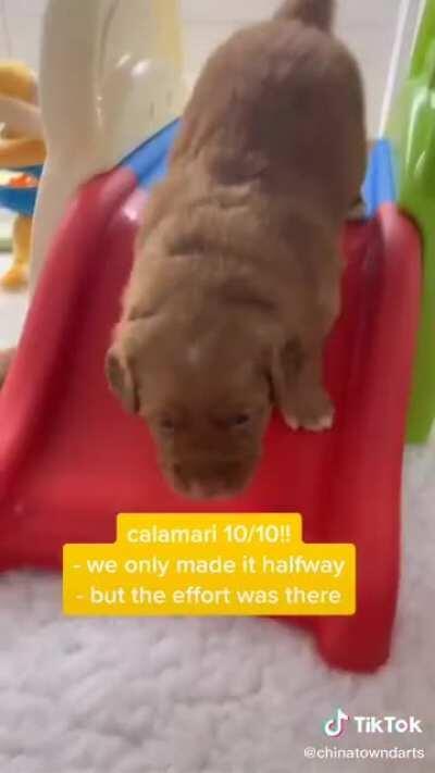 Puppy tiktok