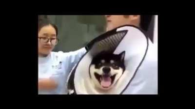 Dog being vaccinated (from r/WatchPeopleDieInside)