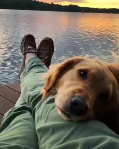 Dog Mirin during beautiful sunset