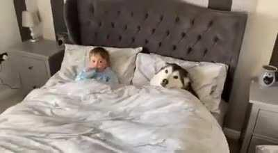 Doggo refuses the owner to get out of bed then proceeds to fall asleep looking after little human