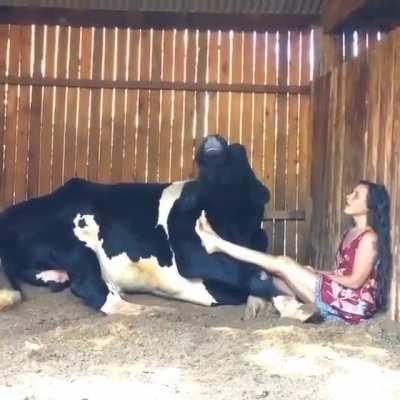 Ever hear a cow sing before? Listen to the end, the cow actually harmonizes with her ❤️