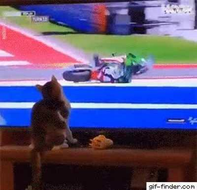PSYcHo Cat InTentioNALLY caUSEs HoRRIFIc MOTorcYcle AcCiDeNt