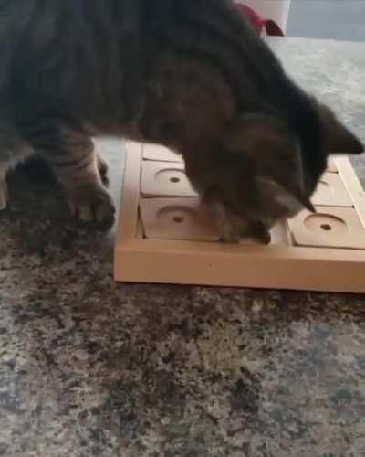 She has to puzzle to get her treats