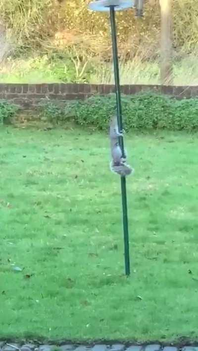 Mum was fed up of the squirrels stealing all the bird food so she greased the feeder!