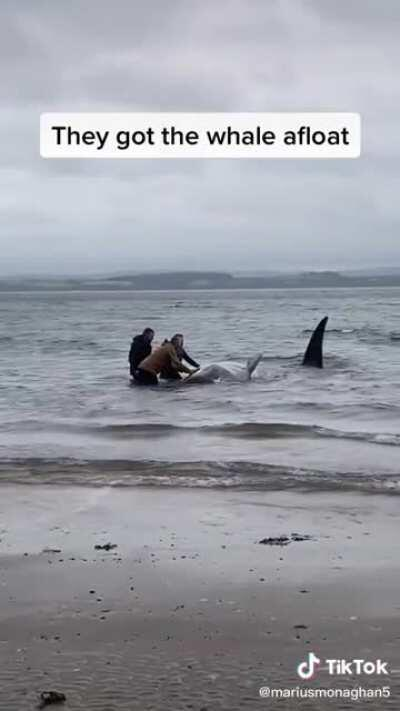 Why whales do this?