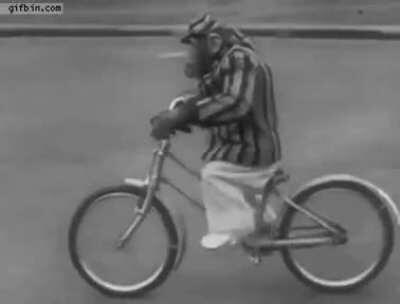 🔥 This talented ape taught himself how to ride a bike! We primates are not so different...