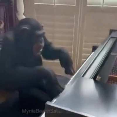 Monke playing Mozart