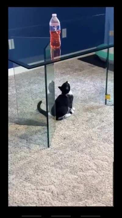 Glass tables are the bane of felines.