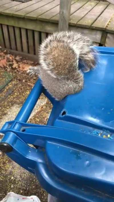 Found this squirrel butt stuck in a recycling bin today